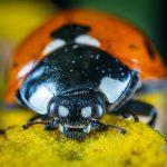 bug kaefer