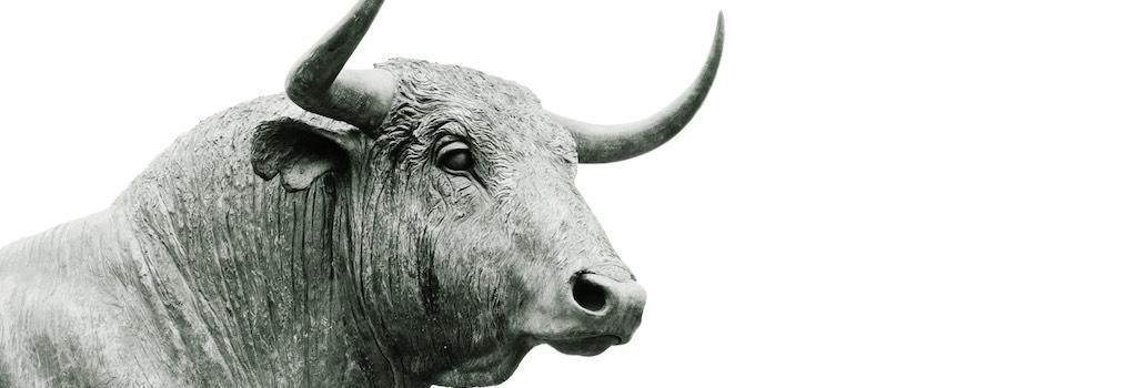 bull stier
