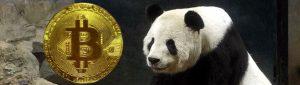 panda bitcoin muenze baer