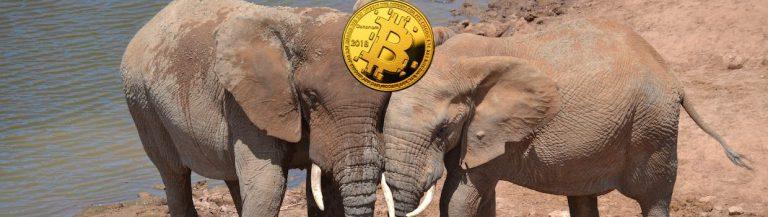 Elefantenhochzeit im Kryptobusiness: Binance tritt Kakao-Council bei