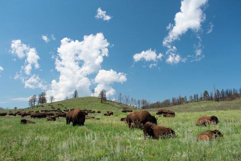 bison app header
