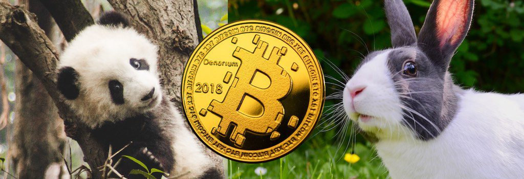panda hase bitcoin